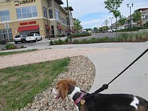 Jasmine at Front Range Village Fort Collins
