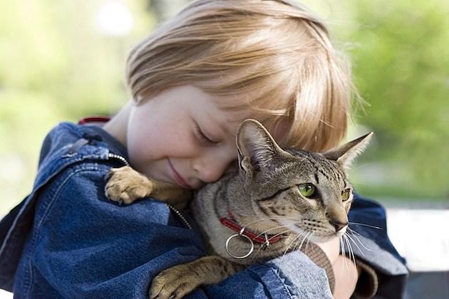 hug your cat