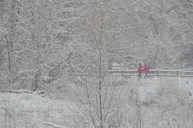 SnowstormRedCoats