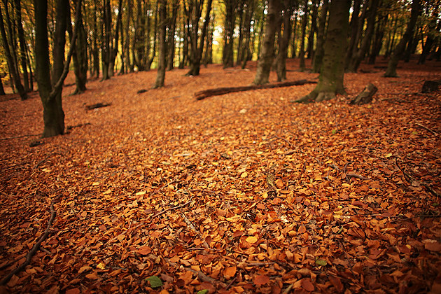 Autumn Colours Can Be Seen Throughout The UK