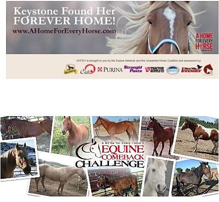 Equine Comback Challenge